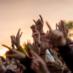 festivalkultur_liste